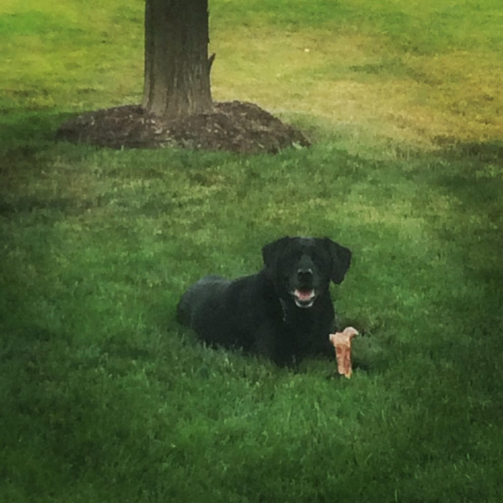 Black dog sitting outside: Pet Tributes in Centennial